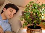 6 loại cây trồng trong phòng ngủ giúp bạn ngon giấc