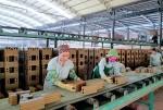 Góp ý về việc triển khai đầu tư các nhà máy gạch tuynel tại tỉnh Sơn La