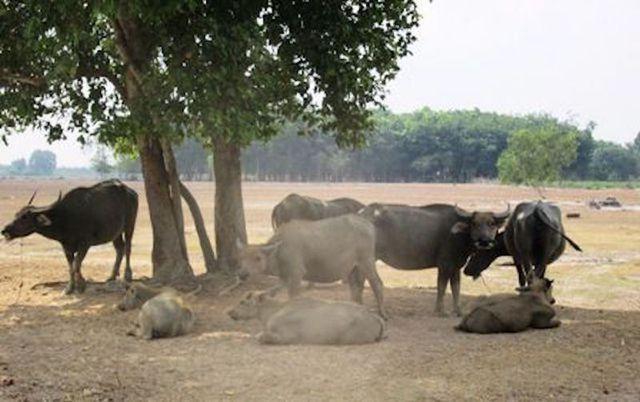 Dự án Công viên Sài Gòn Safari: Gần 2 thập kỷ vẫn chưa giải tỏa được 15 hộ dân