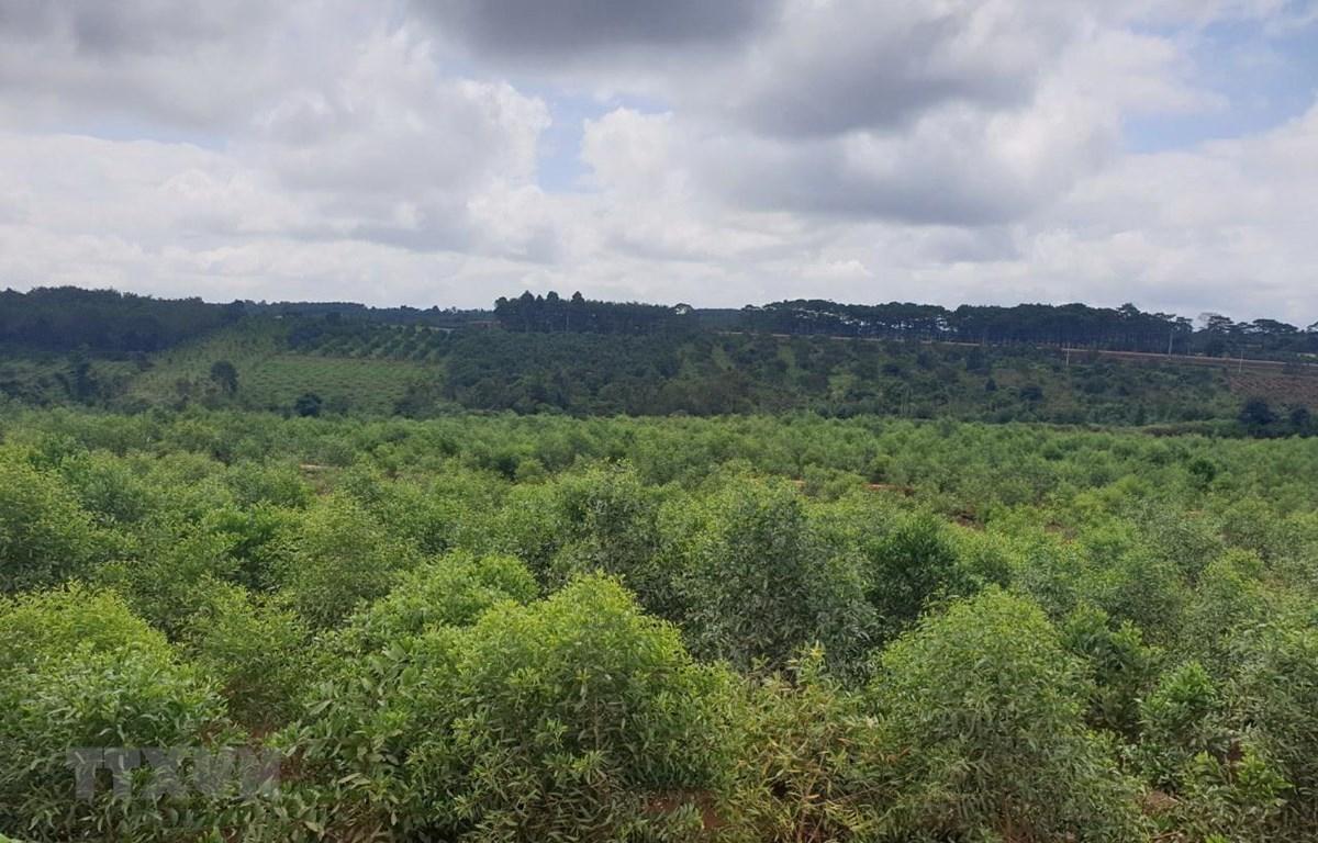 Đắk Nông trồng hơn 30ha rừng phục hồi môi trường sau khai thác bauxite