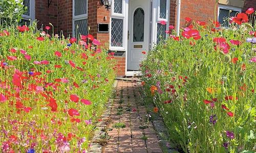 Người đàn ông biến bãi cỏ trước nhà thành cánh đồng hoa