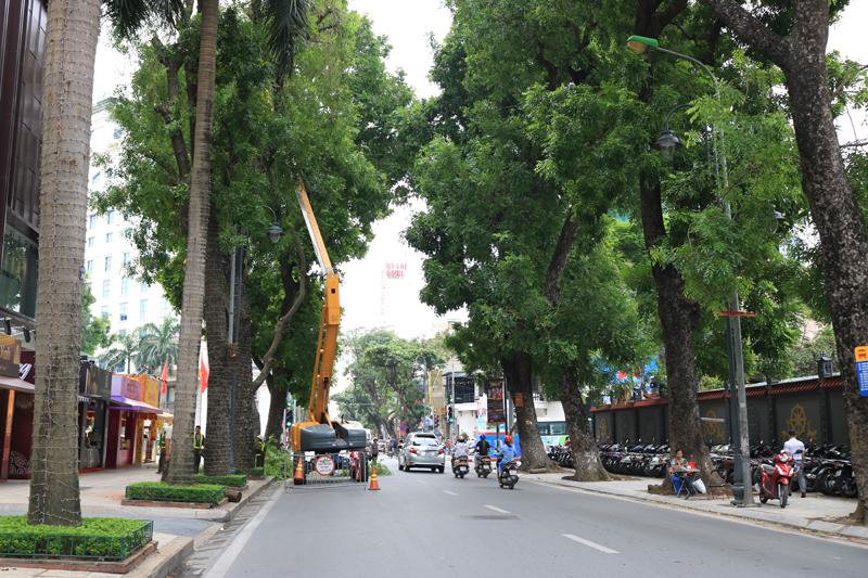 Cắt tỉa cây xanh: Cần có thiết kế và giữ lấy cảnh quan đô thị