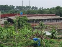 Phú Xuyên (Hà Nội): Cần làm rõ việc sửa chữa, cải tạo chuồng trại làm nơi nuôi, mổ bò