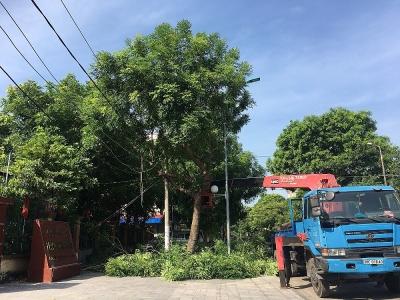Thành phố Thanh Hóa: Hơn 1.000 cây xanh được cắt tỉa trước mùa mưa bão