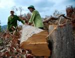 Chấn chỉnh tồn tại trong quản lý rừng tại Phú Yên