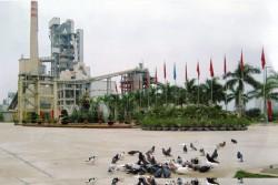 VICEM đẩy mạnh chiến lược phát triển bền vững và sản xuất xanh