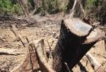 Thủ tướng yêu cầu điều tra, xử lý nghiêm các vụ phá rừng tại Quảng Nam