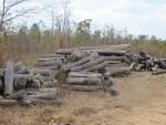 Kiểm điểm tập thể, cá nhân vụ khai thác gỗ trái phép tại Đắk Lắk