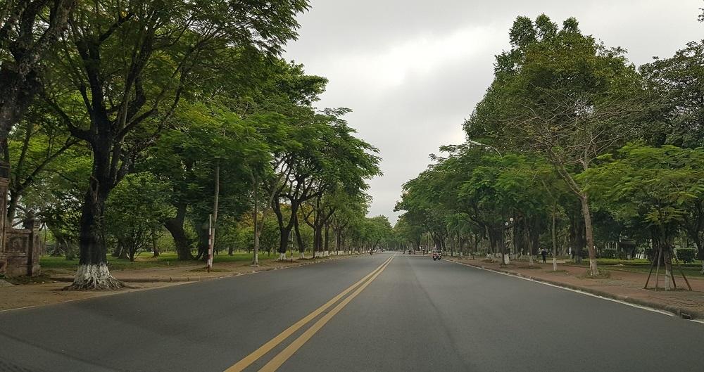 Thừa Thiên - Huế: Tăng cường quản lý cây xanh đô thị trong mùa mưa bão