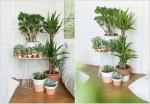 Các loại cây cảnh lớn trồng trong nhà vẫn xanh tốt