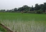 Chuyển mục đích sử dụng đất tại tỉnh Phú Thọ