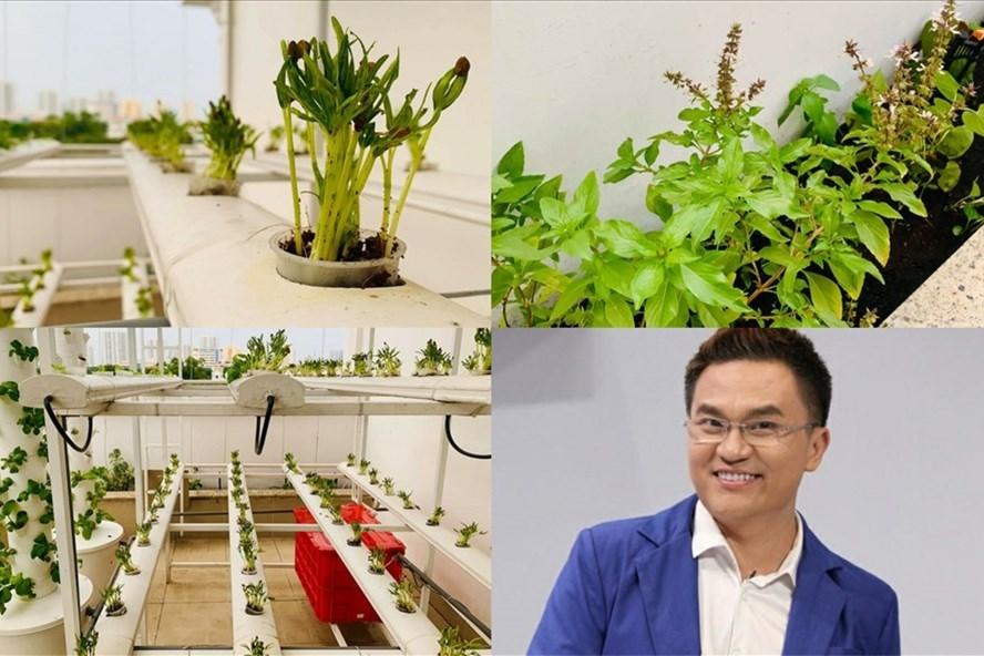 Độc đáo vườn rau trong biệt thự được trồng bài bản của MC Đại Nghĩa