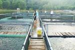 Hà Tĩnh: Nghi Xuân là huyện đầu tiên đạt chuẩn Nông thôn mới