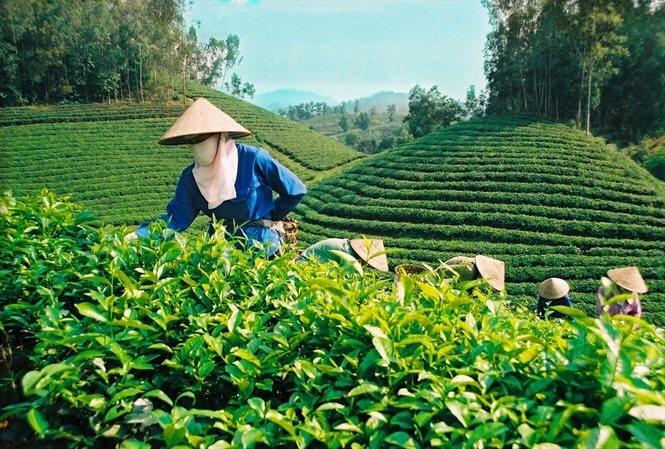 Phú Thọ: Sản xuất nông lâm nghiệp, thủy sản tăng 3,4% so với năm 2018