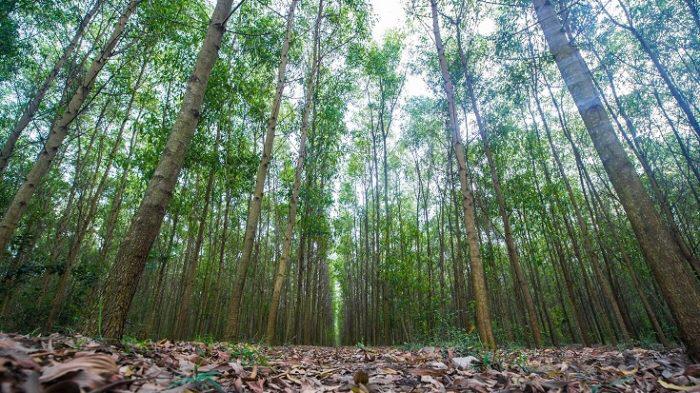Thu hồi đất rừng sản xuất được bồi thường thế nào?