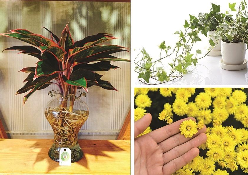 Top những loại cây giúp thanh lọc không khí căn phòng dịp đầu năm
