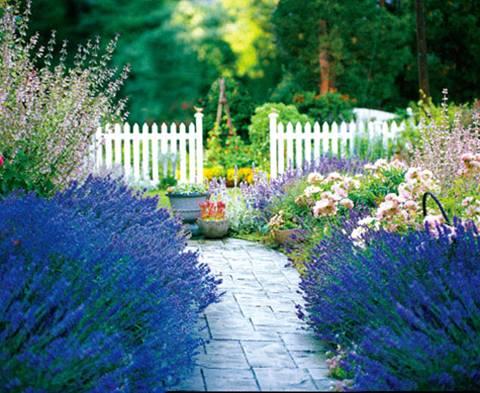 Lối đi sân vườn sang – sáng – sạch với gạch lát - ảnh 3