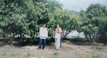 Bình Chánh - TP.HCM: Dân khổ bởi chính quyền bất nhất