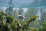 Ngất ngây ngắm thế giới động vật kỳ thú ở FLC Zoo Safari Park Quy Nhơn