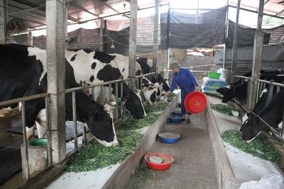 Xã Thái Hòa, Lập Thạch (Vĩnh Phúc): Phấn đấu về đích xã nông thôn mới nâng cao