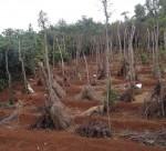 Cần giải quyết dứt điểm vụ cấp đất sai của xã Vĩnh Hòa