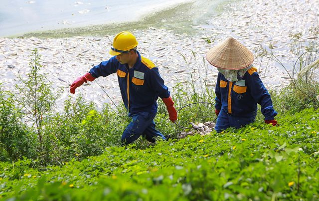 Hà Nội: Cá chết hàng loạt bốc mùi nồng nặc ở hồ Yên Sở