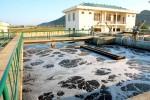 """Bộ Xây dựng góp ý đề xuất Dự án """"Thoát nước và xử lý nước thải khu vực thị xã Bến Cát – tỉnh Bình Dương"""""""