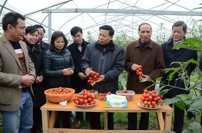 Bắc Ninh: Tái cơ cấu nông nghiệp gắn xây dựng nông thôn mới
