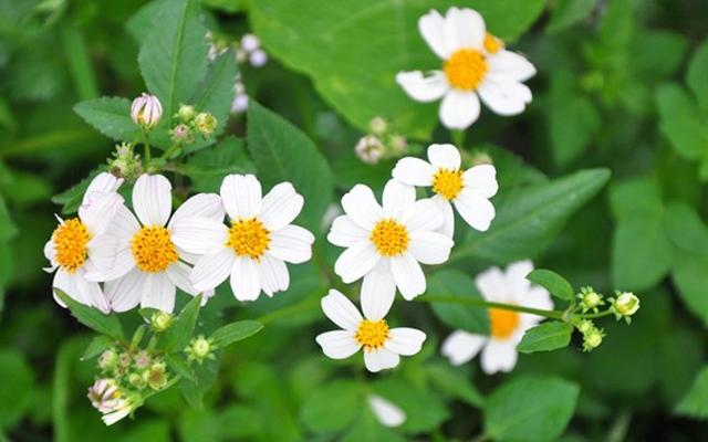 Đi tìm hoa dại