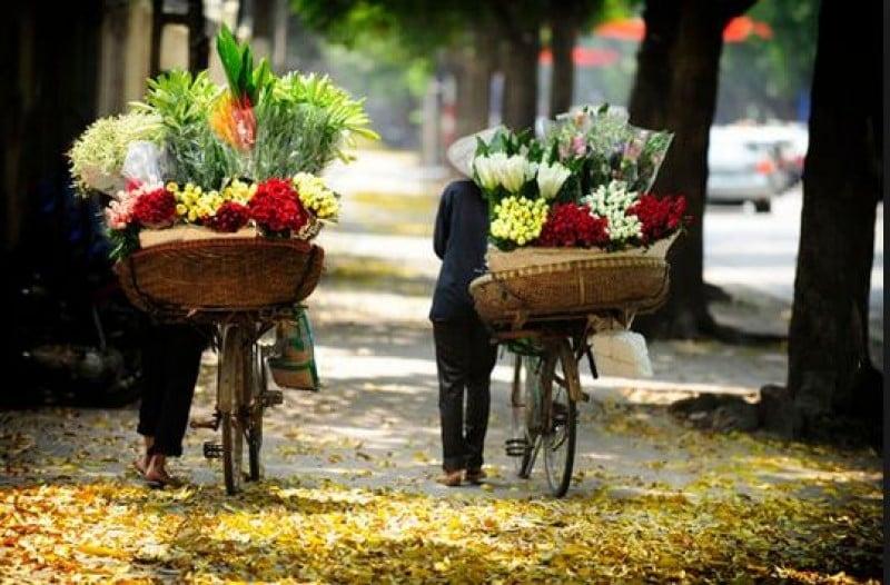 Hà Nội - những mùa hoa gây nhớ