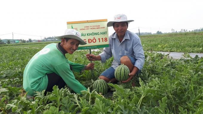Phụng Hiệp phát triển nông nghiệp bền vững gắn với xây dựng nông thôn mới