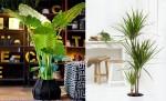 Các loại cây 'độc' dễ tìm và chăm sóc giúp ngôi nhà thêm… xuân