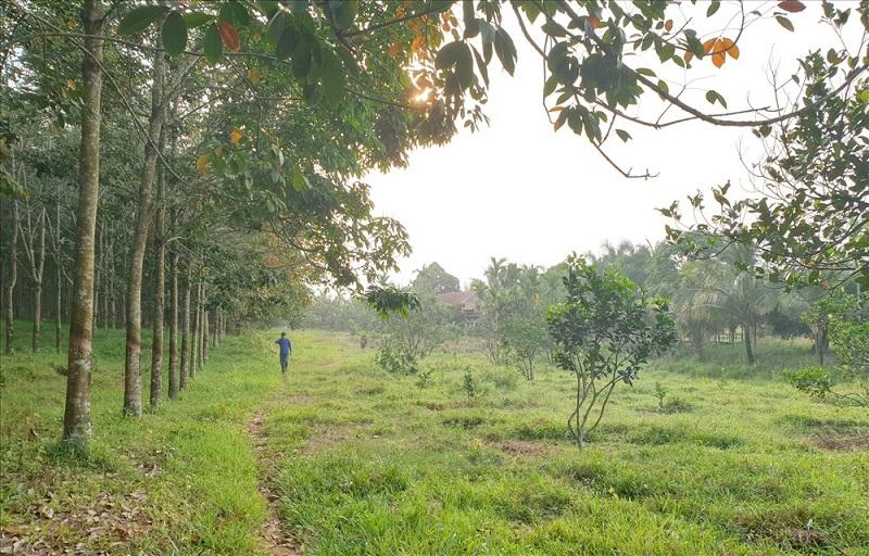 Cận cảnh trang trại trên đất rừng của giám đốc công ty lâm nghiệp