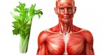 Điều xảy ra với cơ thể khi bạn ăn cần tây thường xuyên