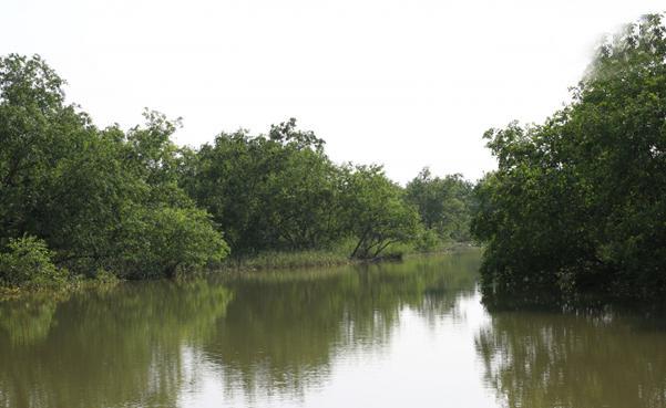 Thái Thụy (Thái Bình): Hướng phát triển du lịch sinh thái đối với diện tích rừng ngập mặn