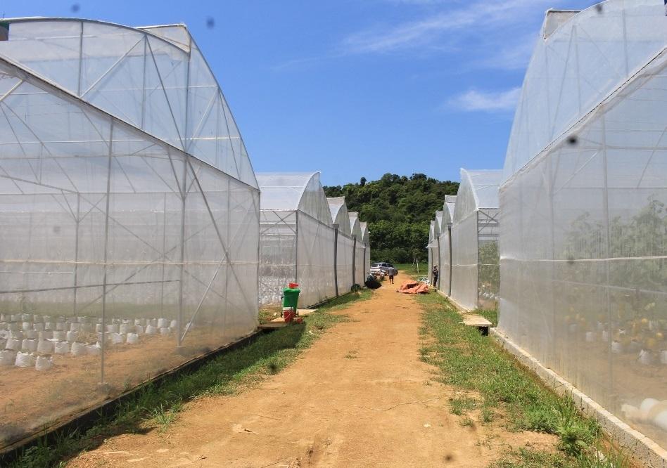 Thanh Hóa xây dựng nông thôn mới gắn với tái cơ cấu ngành Nông nghiệp: Bức tranh hài hòa, tươi sáng