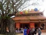 Công nhận cây bồ đề cổ thụ là Cây di sản Việt Nam