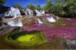 Rực rỡ sắc màu trên dòng sông Cano Cristales