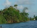 Danh lam thắng cảnh Đảo Cò (Hải Dương): Được công nhận di tích quốc gia