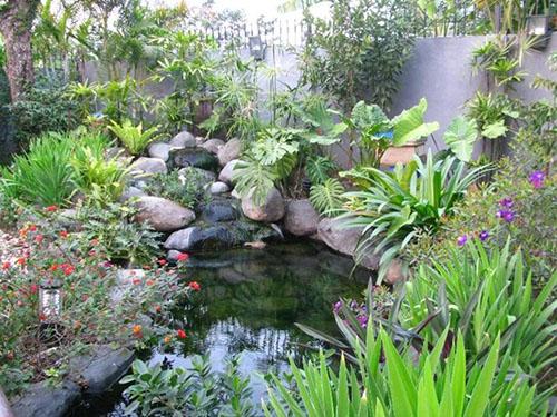 Những cách chọn, trồng cây xanh mang lại tài vận và may mắn (4)