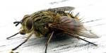 Con ruồi có giá 500 triệu đồng: bài học đau xót