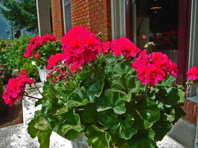 trồng cây trong nhà mang lại may mắn