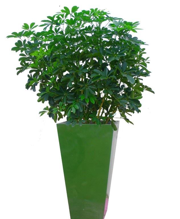 loài cây nên trồng trong nhà