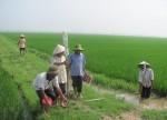 Đất nông nghiệp có bị thu hồi khi hết thời hạn sử dụng?