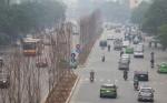 Trồng cây phong lá đỏ ở Hà Nội, tất cả còn đang là thí điểm