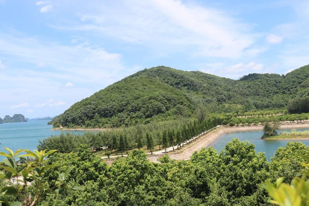 Đảo Thẻ Vàng mượt mà màu xanh trong tiết xuân