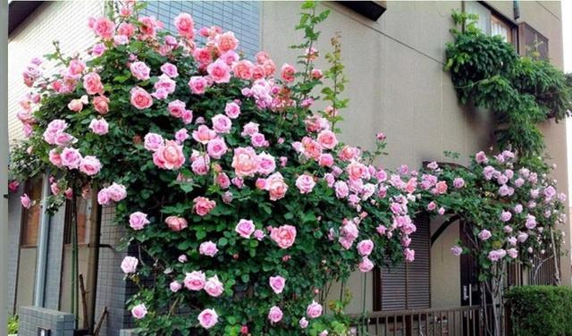 ngo ngang voi nhung ban cong day hoa va cay xanh khien ban ngam mai khong chan