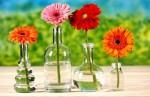 Chọn hoa xuân đón phú quý vào nhà