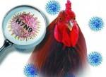 Thông tin dịch bệnh cúm A (H7N9)