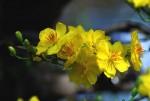 Những loại hoa nên chưng ngày Tết để may mắn, nhiều tài lộc